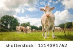 brown cow on green grass... | Shutterstock . vector #1254391762