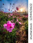 beautiful pink flowers and blue ... | Shutterstock . vector #1254423622