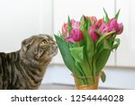 a young lovely cat with thick... | Shutterstock . vector #1254444028