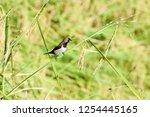 pacitan   east java   indonesia ... | Shutterstock . vector #1254445165