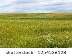 agricultural fields with... | Shutterstock . vector #1254536128