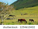 the horses grazing at the... | Shutterstock . vector #1254613432