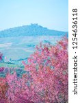 wild himalayan cherry flower ... | Shutterstock . vector #1254636118