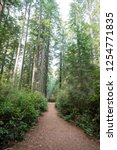 hiking trails at the lady bird... | Shutterstock . vector #1254771835