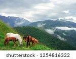 pasture of horses in a wild... | Shutterstock . vector #1254816322