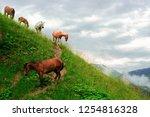 pasture of horses in a wild... | Shutterstock . vector #1254816328