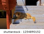 leh ladakh india april 11  ...   Shutterstock . vector #1254890152