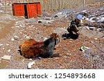 leh ladakh india april 11   the ...   Shutterstock . vector #1254893668