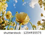 the dark blue spring sky and... | Shutterstock . vector #1254935575