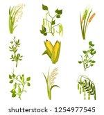 flat vector sett of cereals and ... | Shutterstock .eps vector #1254977545