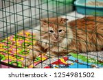 cat show distribution of... | Shutterstock . vector #1254981502