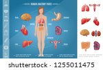 cartoon woman body organs... | Shutterstock .eps vector #1255011475
