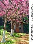 little hut in cherry blossom... | Shutterstock . vector #1255033978