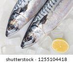 Fresh Raw Mackerel Fish On Ice...