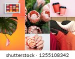 creative collage inspired by... | Shutterstock . vector #1255108342