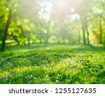 spring grass background with... | Shutterstock . vector #1255127635