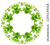 floral frame wreath from green... | Shutterstock . vector #1255159318