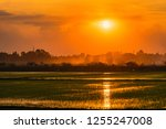 rice field view while the sun... | Shutterstock . vector #1255247008