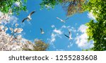 Seagulls Flying In The Sky...