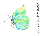 colorful butterfly art... | Shutterstock . vector #1255320505