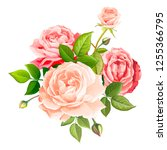 beautiful bouquet flowers of... | Shutterstock .eps vector #1255366795