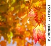 autumn leaves copyspace | Shutterstock . vector #125545025