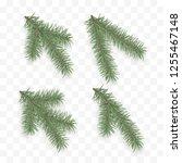 set of realistic fir branches.... | Shutterstock . vector #1255467148