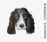portrait of english springer...   Shutterstock .eps vector #1255496818