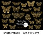 butterflies drawing vector set  ... | Shutterstock .eps vector #1255497595