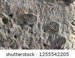 plaster wall texture... | Shutterstock . vector #1255542205