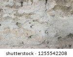 plaster wall texture... | Shutterstock . vector #1255542208