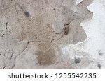 plaster wall texture... | Shutterstock . vector #1255542235