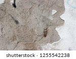 plaster wall texture... | Shutterstock . vector #1255542238