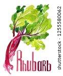Rhubarb. Hand Drawing...
