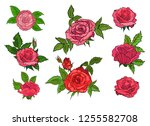 set of red roses on isolated... | Shutterstock .eps vector #1255582708