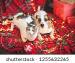 Dog And Cat In Christmas...