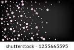 nice sakura blossom isolated... | Shutterstock .eps vector #1255665595