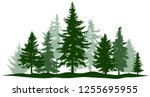 green forest evergreen pine ... | Shutterstock .eps vector #1255695955