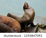 seals along the oregon coast... | Shutterstock . vector #1255847092