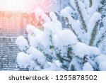winter tree in park background | Shutterstock . vector #1255878502
