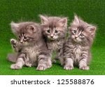 Stock photo three gray kittens on artificial green grass 125588876