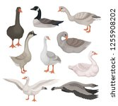 flat vector set of gray and... | Shutterstock .eps vector #1255908202