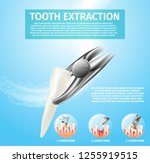 realistic illustration tooth... | Shutterstock .eps vector #1255919515