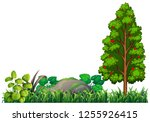 isolated nature plant element... | Shutterstock .eps vector #1255926415