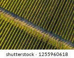 rows in a vineyard  natural... | Shutterstock . vector #1255960618