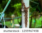 closeup picture of rusted lock... | Shutterstock . vector #1255967458