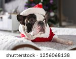 french bulldog in santa costume ... | Shutterstock . vector #1256068138
