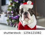 french bulldog in santa costume ... | Shutterstock . vector #1256121082