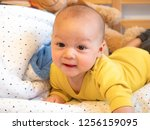 cute 4 months old old mixed... | Shutterstock . vector #1256159095
