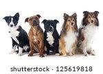 portrait of five purebred dogs... | Shutterstock . vector #125619818